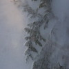 Frozen Cedar branch- Artist Point