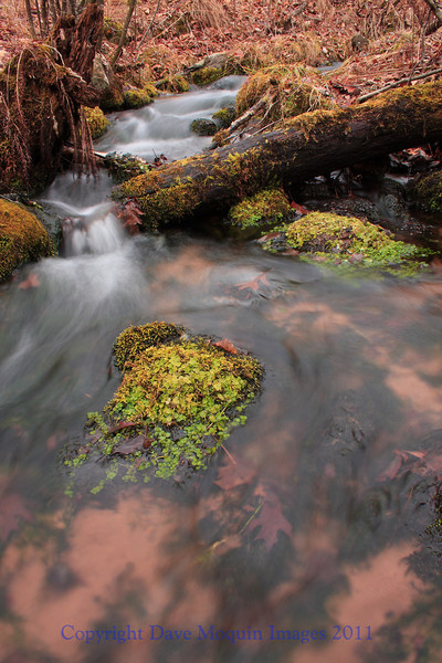 Fox Landing Creek- Grantsburg,WI