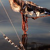 Frozen fishing line(as art)- Lake Fremont