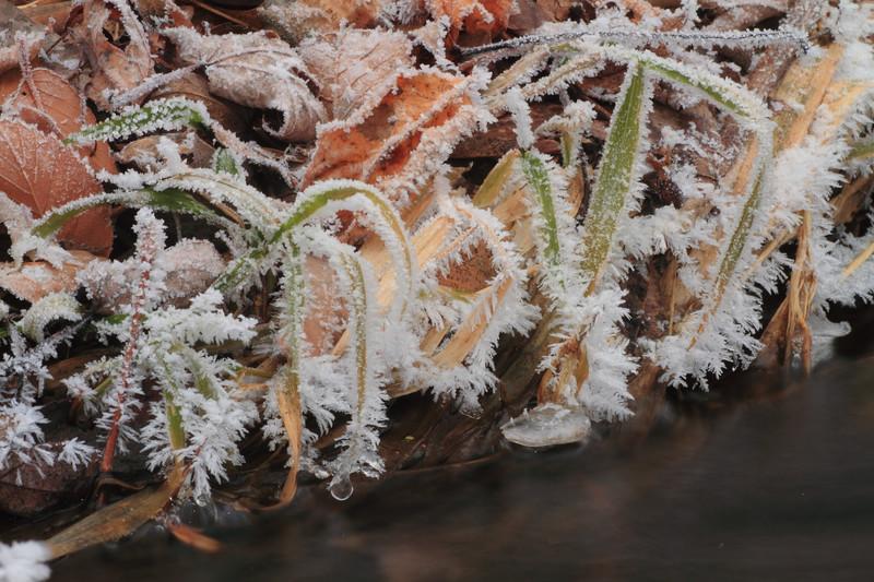 Hoarfrost on grass- Elk River