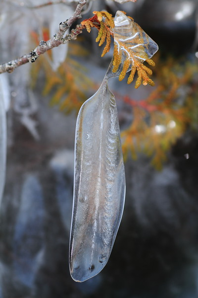 Feather shaped Ice- Artist Point