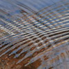 Ripples in water- Sherburne NWR