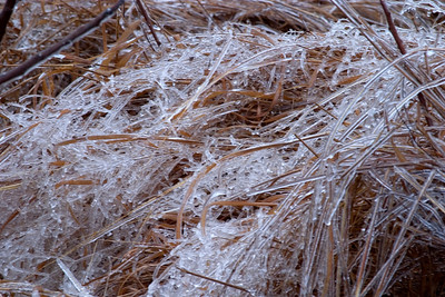 Ice covered grass near Pere Marquette State Park, IL