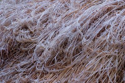Icy Grasses, Pere Marquette State Park, IL