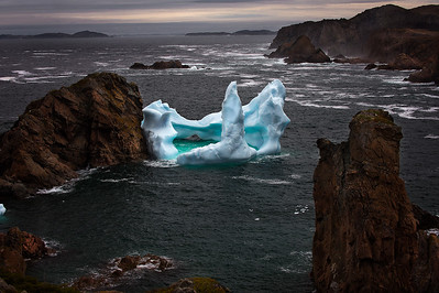 Iceberg in Spillars Cove