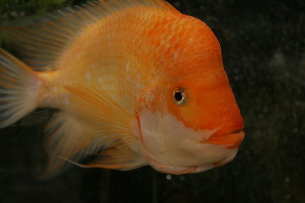 Ichthyes