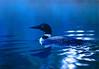 Blue Loon