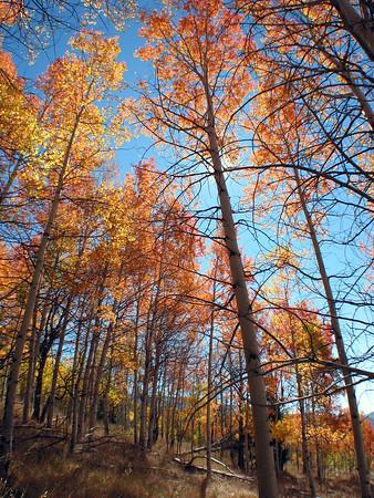 Idaho Fall Colors