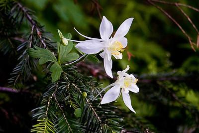 Idaho Wildflowers and Vistas
