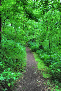 A walk through the emerald woods...South Cove Trail in Ijams Nature Center.