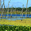Orlando Wetlands Park, Nov. 2016