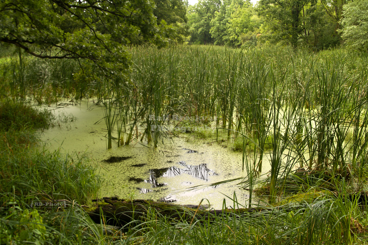 Swamp in Moraine Hills State Park, McHenry County, Illinois, USA