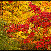 <h3>shades of fall</h3>