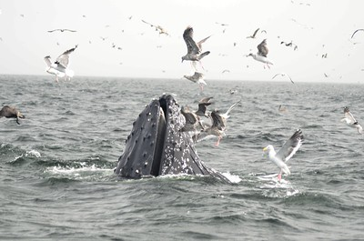 Impromptu Whale Watch 08-2018