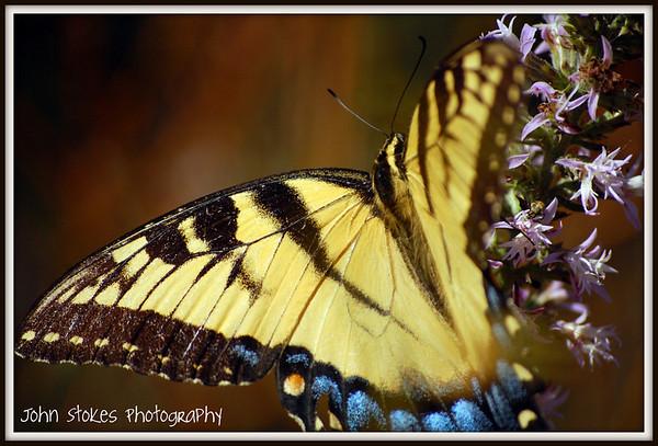 In Praise of Papilionidae