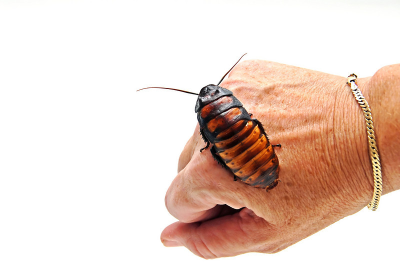 A roach on the hand is worth two in the... naw, it's just a roach on the hand.