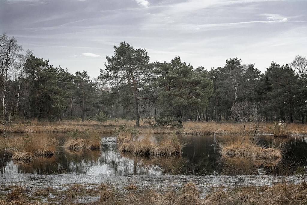 Ravenvennen, Velden