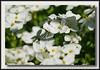 Backyard flowers w/Sigma 50-500