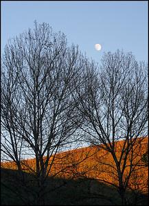 Garin Trees