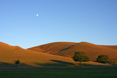 Moon over Garin Park, Hayward.