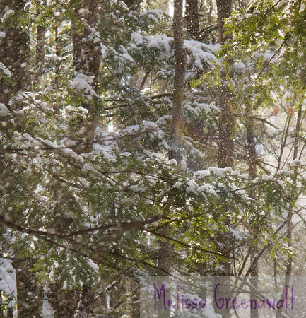 "Having a forest moment...there's something magical about being in a woodsy hug: the light is perfect, the soothing ""ssssssssssss"" of snow sliding from boughs.  And, look--a rainbow! Plymouth, NH."