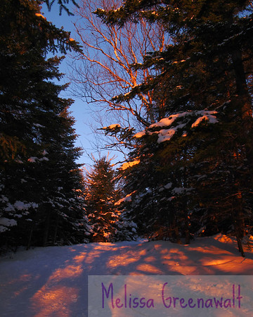 An electric sunset illuminates the world during an ascent of the Doublehead Ski Trail, Jackson, NH.