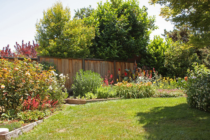 Back yard, June 2009