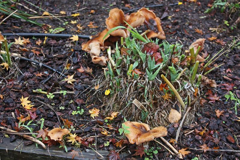 Mushrooms, December 2010