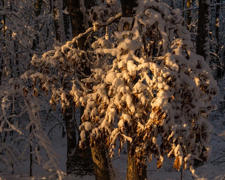Winter Sunrise Glory