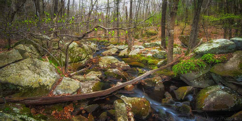 Spring, Purgatory Brook, Sutton MA