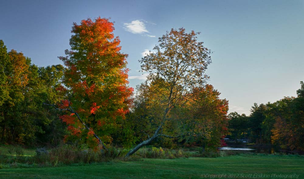 Sunrise Maples, Sutton, Massachusetts