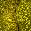 Jackfruit friends<br /> Jackfruit - Artocarpus heterophyllus
