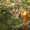 """One Eye of Banhavgarh"""
