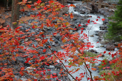 Indian Henry's Mt. Rainier 9_2006
