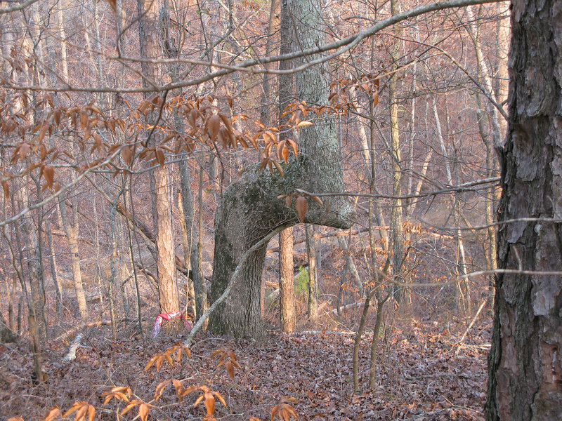 Indian Trail Tree located just South West Cedartown, GA on the Highland Park motorcycle resort. It's on the inner loop near trail 11.