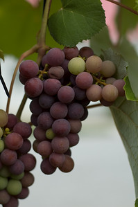 Mallow Run Winery, Bargersville, IN