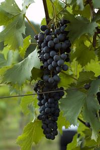 Butler Winery, Bloomington, IN