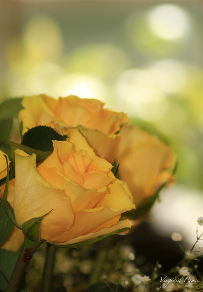 Mother's Day Yellow Roses...