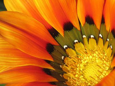 Inner Flora