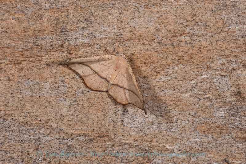 I thought this was interesting with the moth against the wood grain of the house siding.
