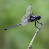 Dragonfly @ Lynnhaven Inlet, VA - Aug 2014