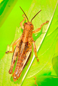 Differential Grasshopper   08 12 09  004 - Edit - Edit