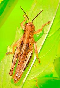 Differential Grasshopper   08 12 09  004 - Edit - Edit