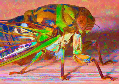 Cicada  09 06 09  026 - Edit