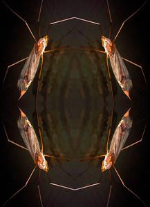 Crane Fly composite 01
