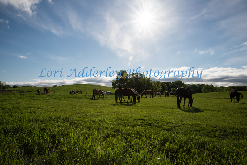 Sunny Herd