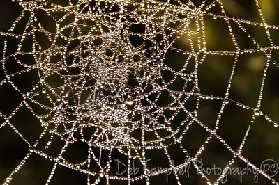 Oh, a tangled web we weave...
