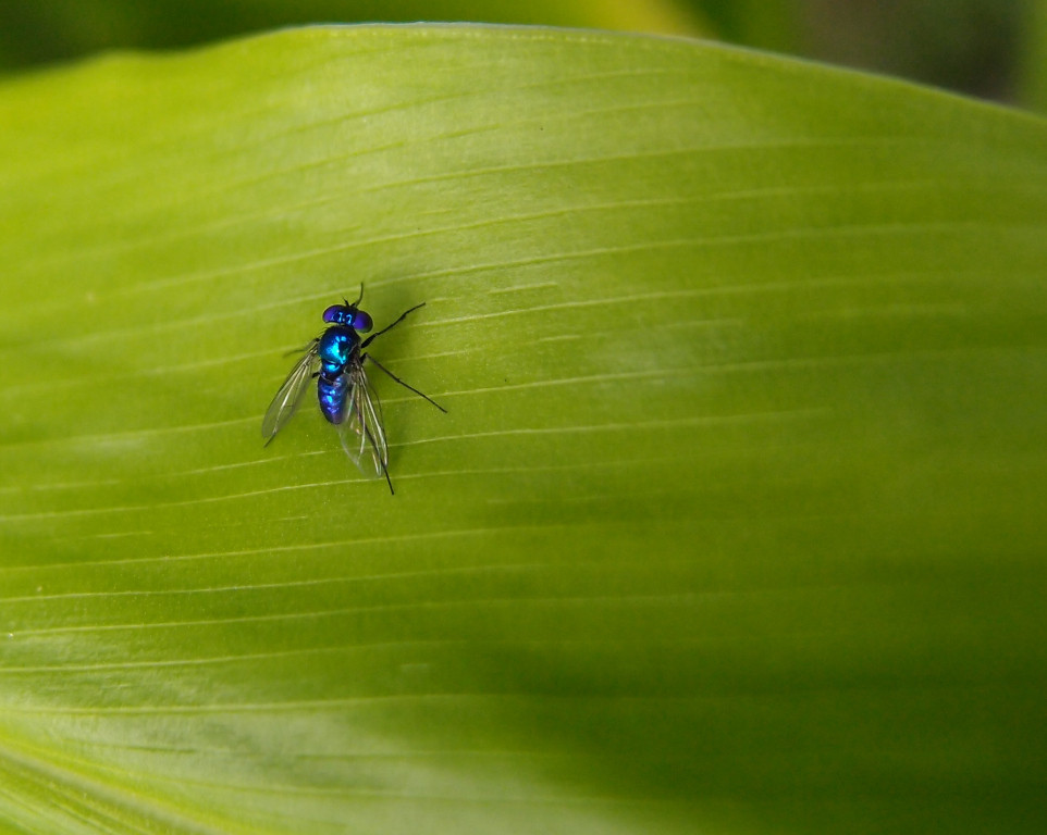 Tiny fly in super macro mode