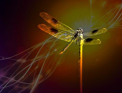 FZ300 Dragonfly. Enhanced in Pic Monkey