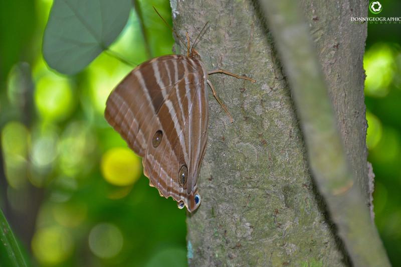A Butterfly in Ubud Bali